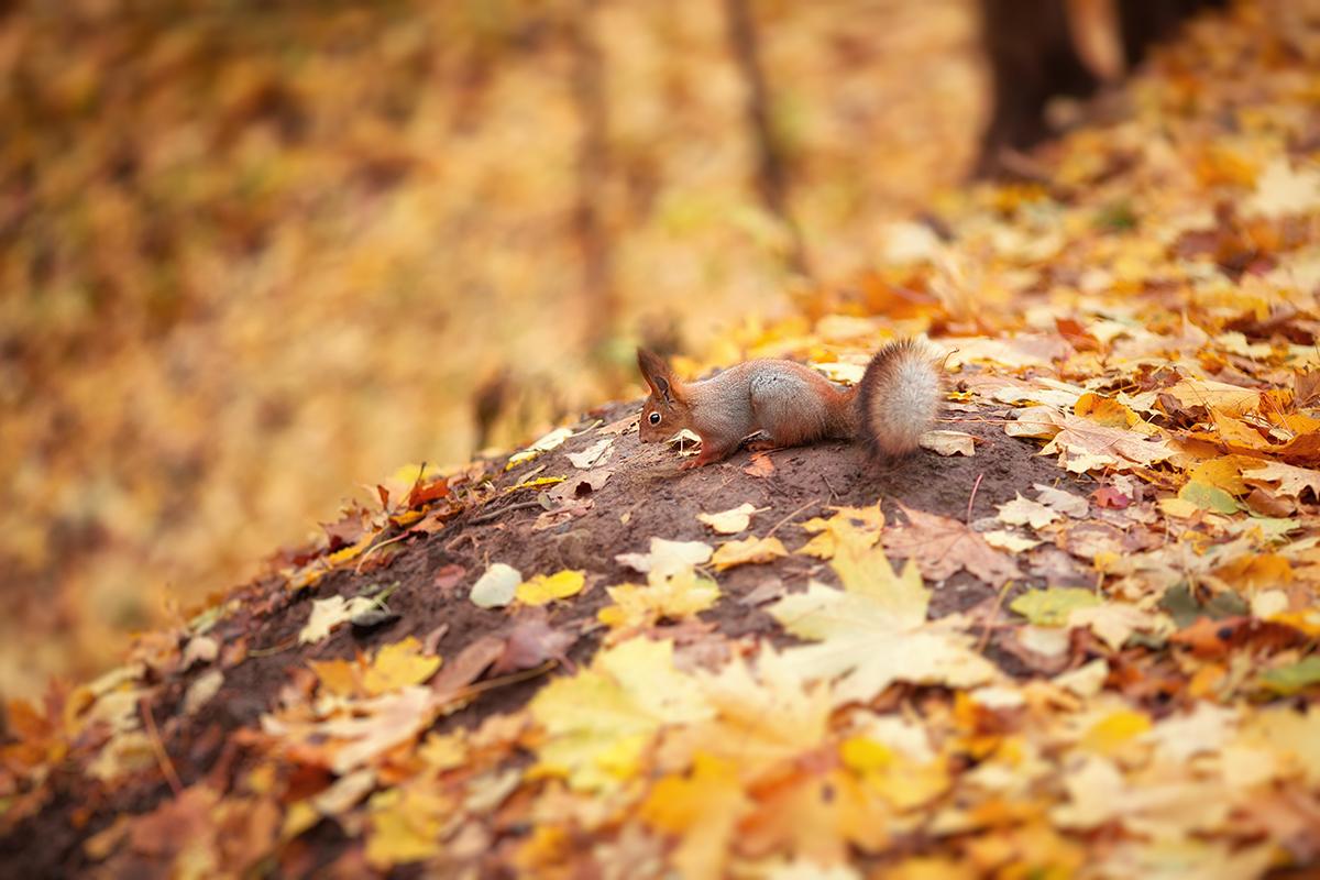 Нужна ли осень в подборках осенних фильмов?