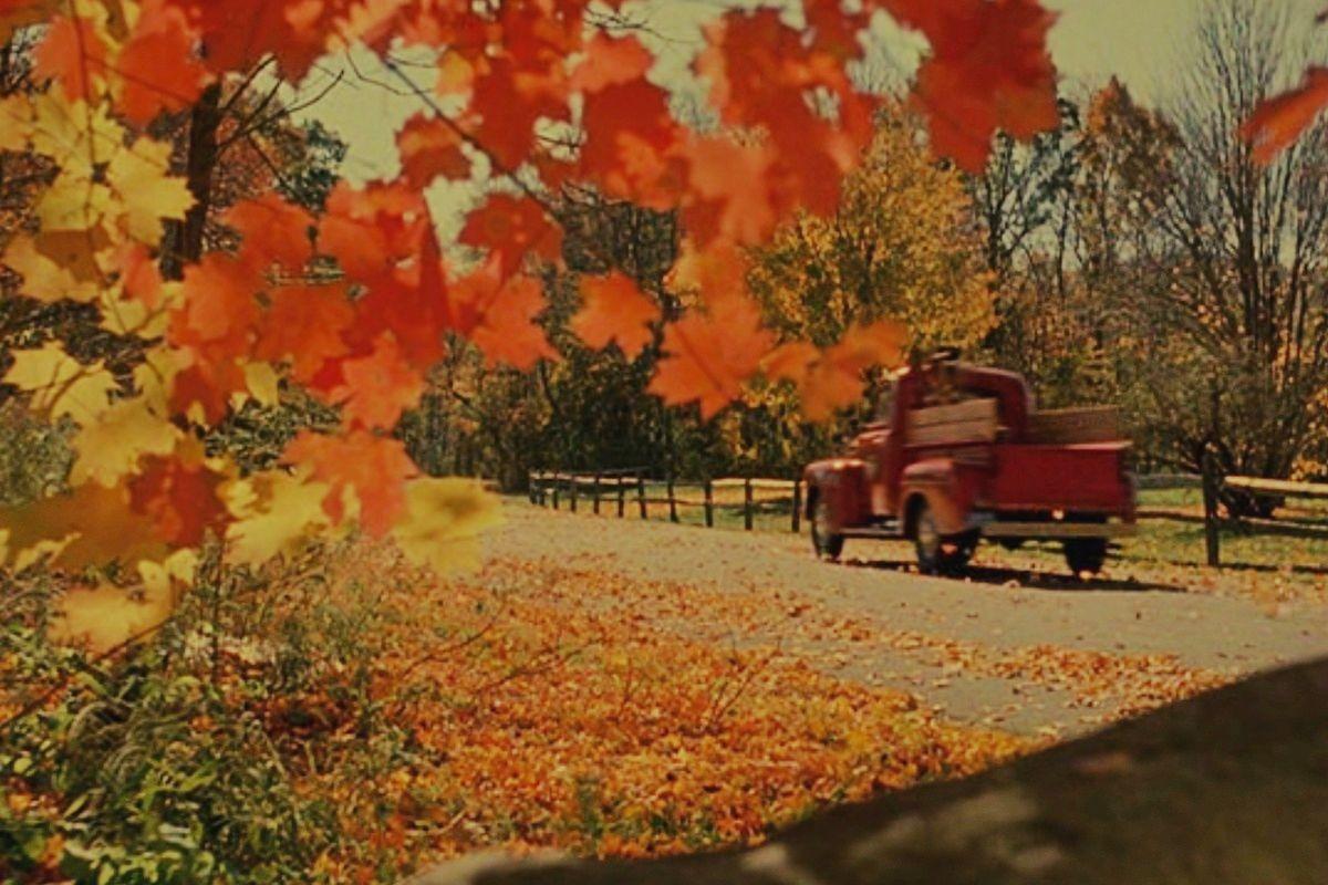 Кадры из фильма «Вдали от рая». Самый красивый осенний фильм
