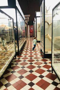В «Зоологическом музее»